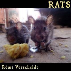 Couverture de Rats